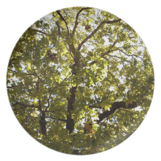 Nature Green Tree Dish Dinner Plates