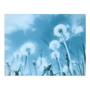 Nature in Blue - dandelion flowers Postcard