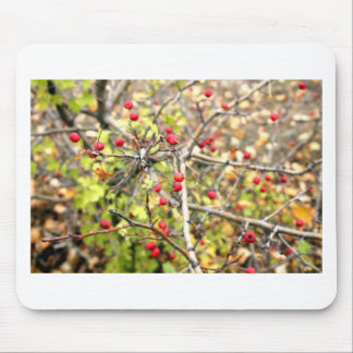 Nature in Russia Mouse Pad