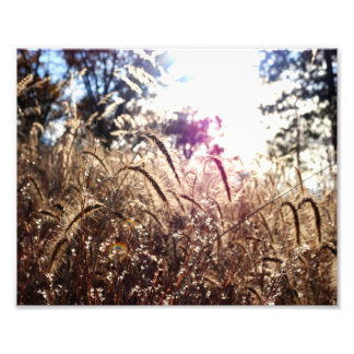 Nature in the Sun Photo Print