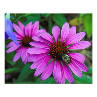 Nature Photo of a Bumble Bee on a Flower
