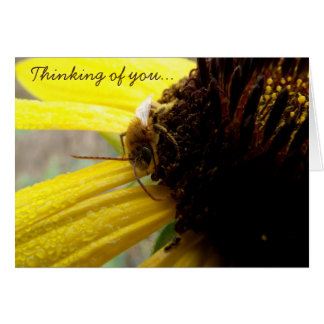 Nature Photo of Wet Dewy Sunflower with Bee Card