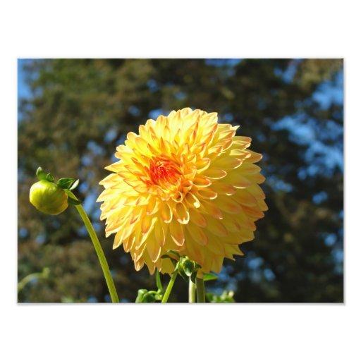 Nature Photography art prints Orange Dahlia Flower Photo