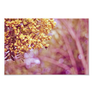 Nature Photography Yellow Blossoms Photo Art