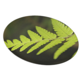 Nature Plate, Fern Photography, Foodies gift Plate