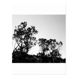 Nature Shots Postcard