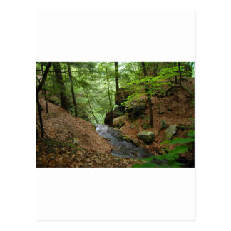 Nature Trail Postcard