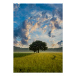 Nature Tree Green Grass Wild Blue Sky Summer Poster