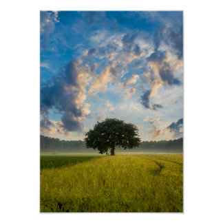 Nature Tree Green Grass Wild Blue Sky Summer Poster