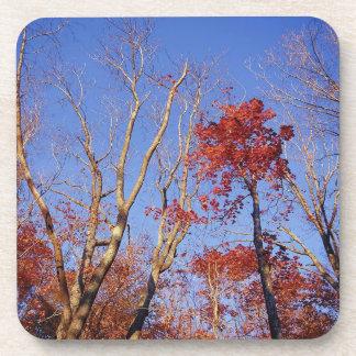 Nature Trees Autumn Burgundy Leaves Coasters