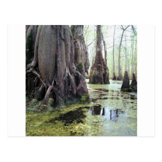 Nature Trees Autumn Swamp Postcard