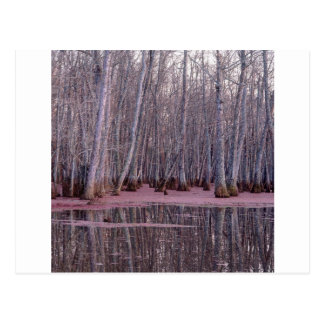 Nature Trees Winter Swamp Post Card