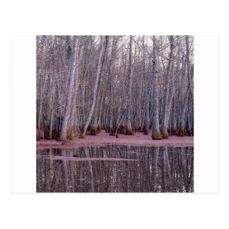 Nature Trees Winter Swamp Postcard