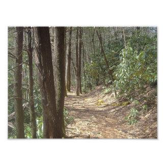 Nature Walk Photographic Print