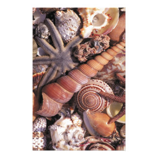 Nature Water Assorted Shells Beach Personalized Stationery