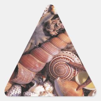 Nature Water Assorted Shells Beach Triangle Sticker
