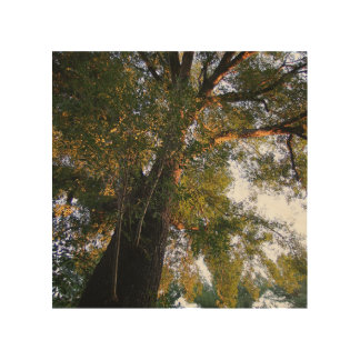 Nature Wood Canvas Template Square Orientation