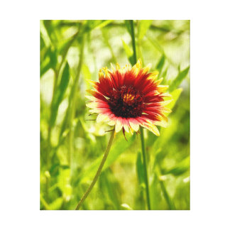 Nature's Beauty 5 - Canvas Collection