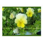 Nature's Beauty Postcards