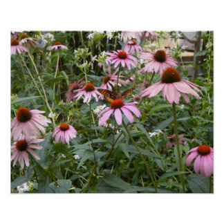 Nature's Best, Butterfly and Pink Daisies Poster