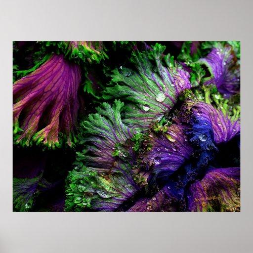 Nature's Colour Poster