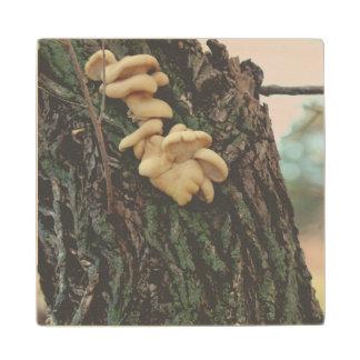 Natures Fruit Wood Coaster