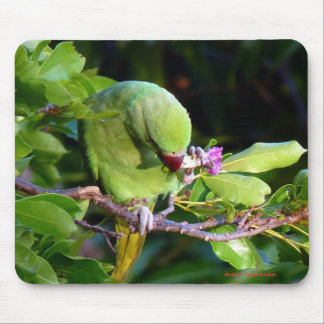 Nature's great moments mouse pad