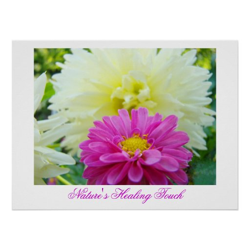 Nature's Healing Touch art print Pink White Dahlia