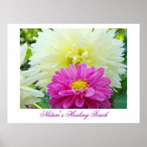 Nature's Healing Touch art print Pink White Dahlia
