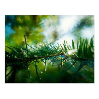 Nature's Magic Postcard