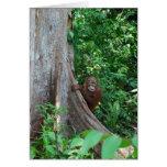 Nature's Original Tree Hugger in Rain Forest Greeting Card