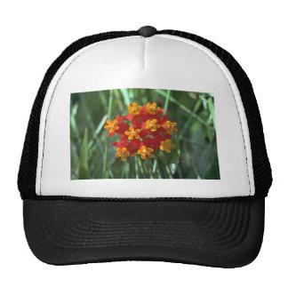 Nature'S Pie Hat