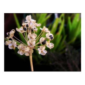 Nature's Seeds Postcard