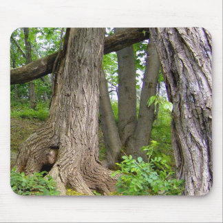 Nature's Tree Trunks Mouse Pad