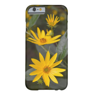 Nature's Yellow Wildflowers Barely There iPhone 6 Case