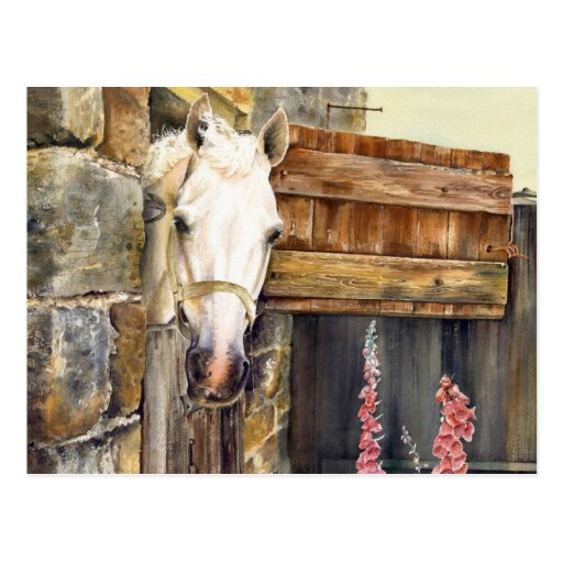 'Naughty Boy' white horse in a barn Postcards