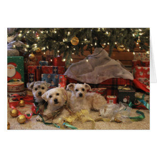 Naughty but Nice - Puppy Holiday Card