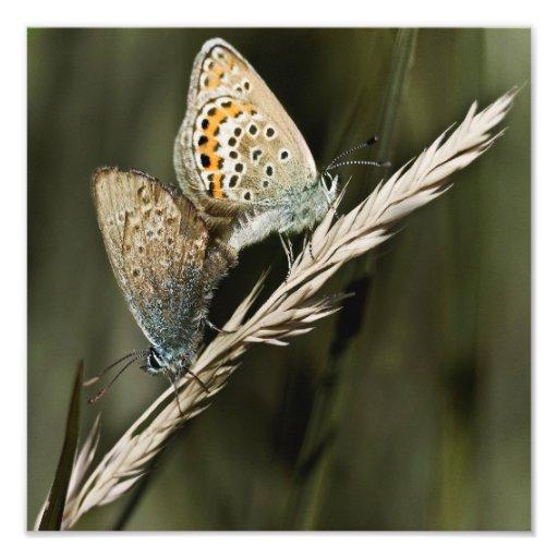 naughty butterflies 12'' x 12'' art photo