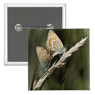 naughty butterflies 15 cm square badge
