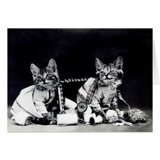 Naughty Kittens Note Card