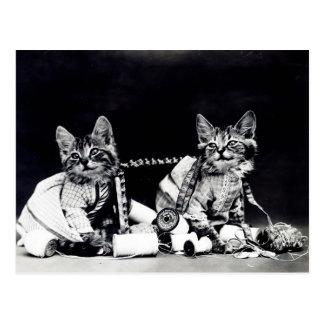 Naughty Kittens Postcard