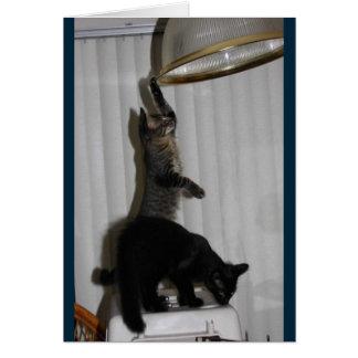 Naughty Kitty Birthday Card