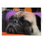Naughty Pug Christmas Card