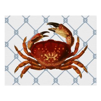 Nautical Crab Postcard