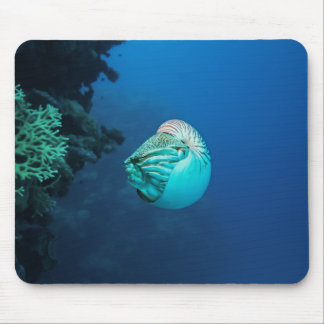 Nautilus Great Barrier Reef Coral Sea Mouse Mat