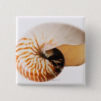 Nautilus seashell (Nautilus stenomphalus) 15 Cm Square Badge