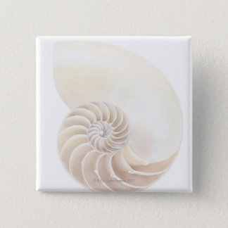 Nautilus shell, close-up 15 cm square badge
