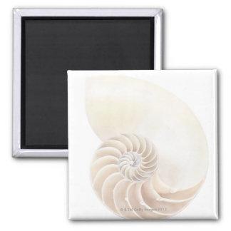 Nautilus shell, close-up magnet