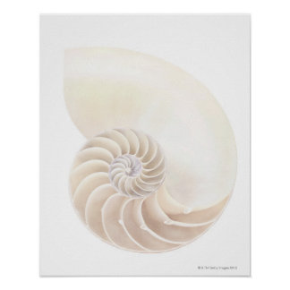 Nautilus shell, close-up poster