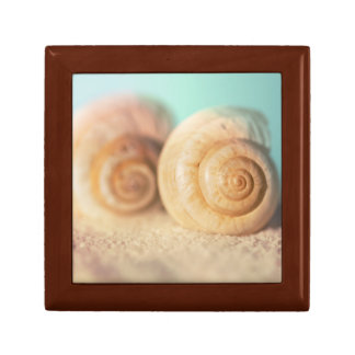 Nautilus Shells On Beach Small Square Gift Box